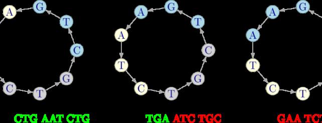 Italia   La Teoría de Códigos en Auxilio de la Biotecnología